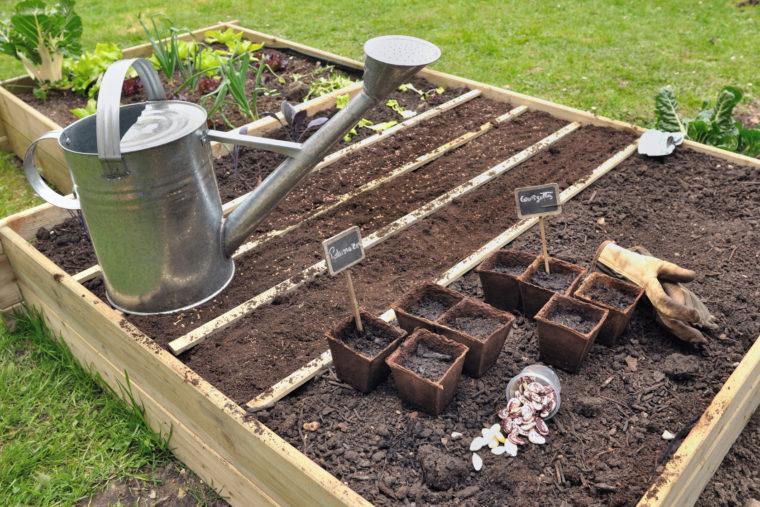 semis dans carr potager