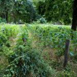 Comment-avoir-un-jardin-ecologique-a-la-maison-.jpg