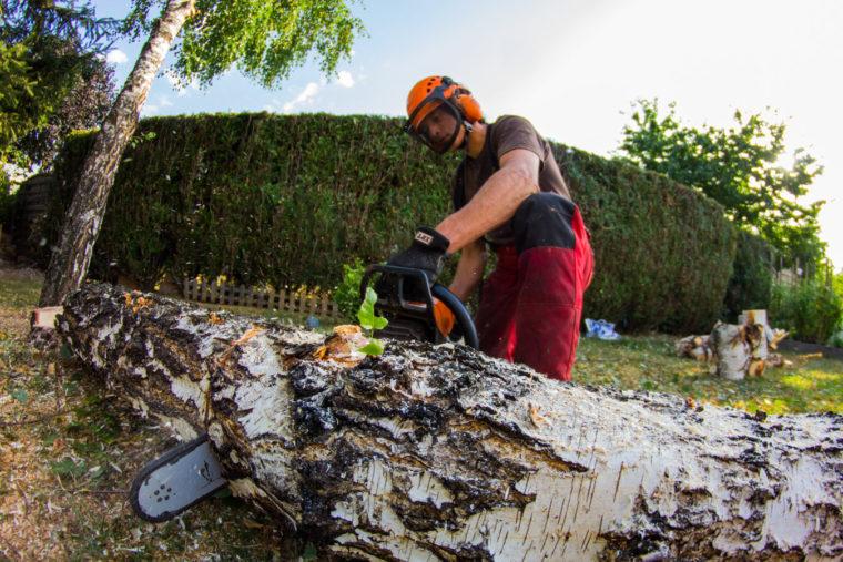 Comment-organiser-l-abattage-d-un-arbre-.jpg